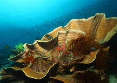 Lengguru 2014 : Biodiversité de Papouasie Occidentale