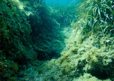 Faune sous-marine de Méditerranée