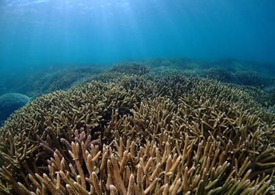 Coraux, Nouvelle-Calédonie