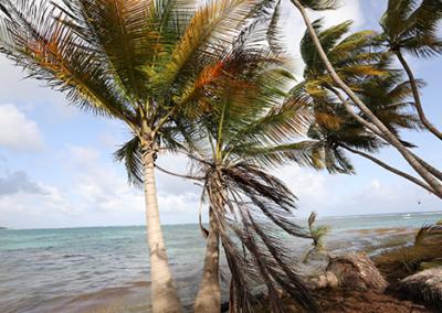 Erosion du littoral, Guadeloupe