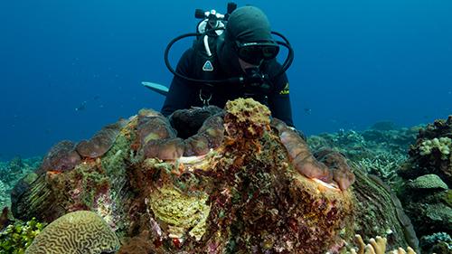 Bénitier et plongeur, Papouasie-Nouvelle-Guinée