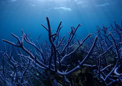 Paysage corallien, Polynésie française